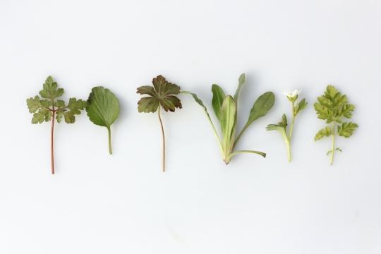 3 bylinky, které pomohou znormalizovat váš menstruační cyklus image